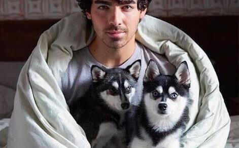 Joe Jonas, Sophie Turner are heartbroken: Here's why