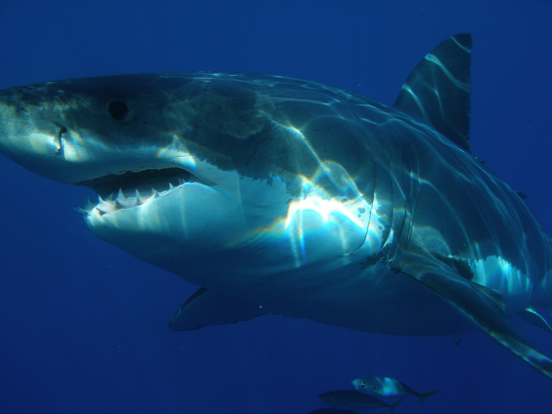 Florida couple had a close encounter with a white shark