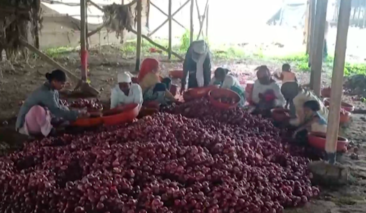 Imported onions to bring relief from skyrocketing prices