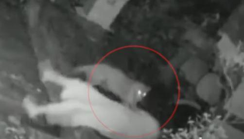 Mumbai में Leopard ने किया 55 वर्षीय महिला पर Attack,Camera में रिकॉर्ड हुई पूरी घटना