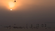 Israel is hosting the annual Hula Valley Bird Festival