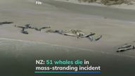 New Zealand: 51 whales die in another mass-stranding incident