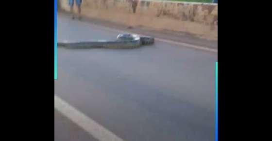 सड़क पार कर रहा था एनाकोंडा, लोगों ने गाड़ी रोक कर दिया रास्ता