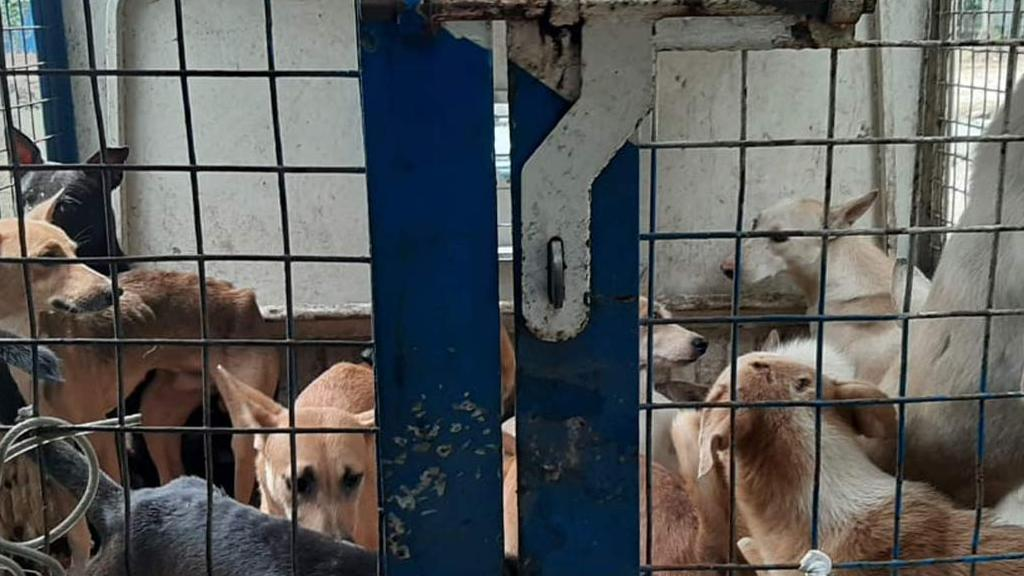 26 dogs allegedly caged for weeks in Kochi Corporation facility released